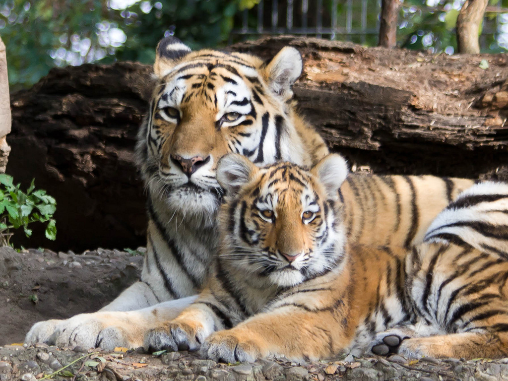 Travel Tiger Track is all about Fusion Travel Living and Giving New Life to your Travel experience