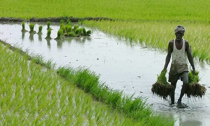 India's Challenges with Sustainable Farming
