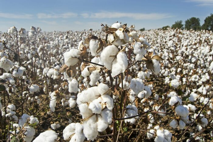 {Wonder Product: Credible} Winning Back the Indian Organic Cotton Farmer's Rep Through a Blockchain Platform