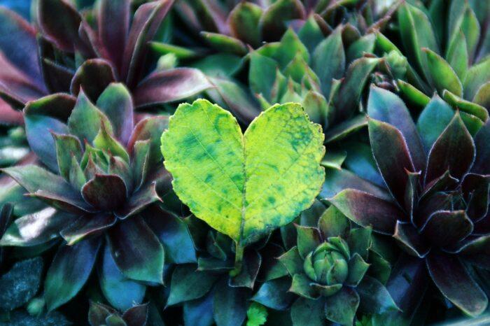 {Wonder Platform: WeNaturalists} An Eco-Social Network for Global Nature Lovers