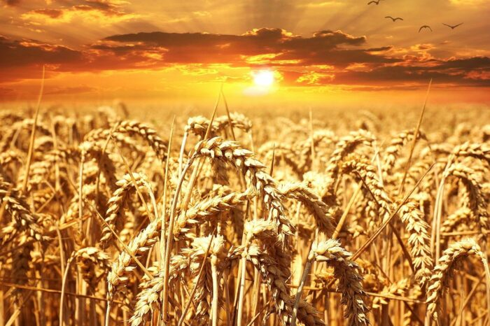 Agritech Bharat: Ministry of Agriculture Appoints Independent Agencies to Conduct Crop Cutting Experiments on Pilot Basis Across 100 Districts in India